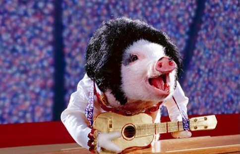 Teaching Pigs to Sing: Why Culture Will Not Work to Solve Your Data Quality Issues