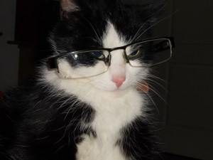salesforce implementation - cat with glasses